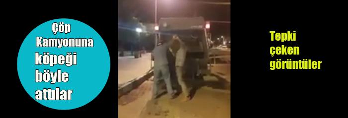 """Nevşehir'de bir köpek çöp kamyonunda ezildi"""" iddiası"""