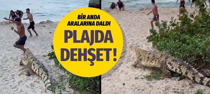 Ünlü plajı dev timsah bastı çığlıklar birbirine karıştı