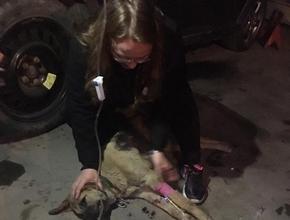 Kadın muhtarın köpeğini zehirlediler!