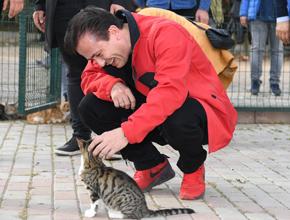 Bu ilçede kediler çok keyifli!