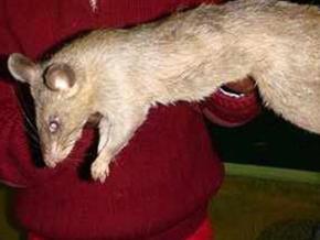 3 aylık bebeği fareler yedi!