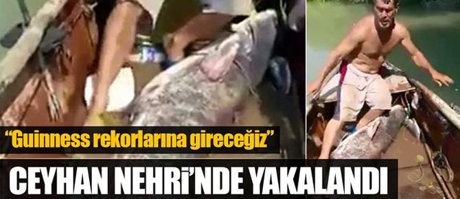 Dev yayın balığı yakalandı