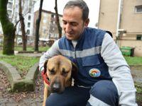 Tuzla'da sokak hayvanları unutulmuyor