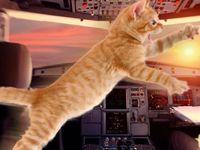 Kedi saldırısı uçağa acil iniş yaptırdı