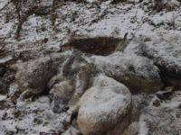 Karda birbirlerine sarılarak öldüler!