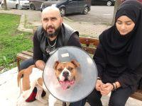 Bulldog'u Sevme Çabası Pahalıya Mal Oldu
