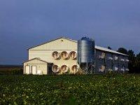 Tavuk Eti Sektörü Çevresel Etkiyi Nasıl En Aza İndirir? (video)