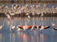 UNESCO Dünya Mirası Olmaya Hazırlanan İzmir'in Gediz Deltası'nda Üreyen Kuş Atlası Çalışması Tamamlandı