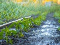 Küresel İklim Değişikliği Gıdaya Erişimi Zorlaştırıyor
